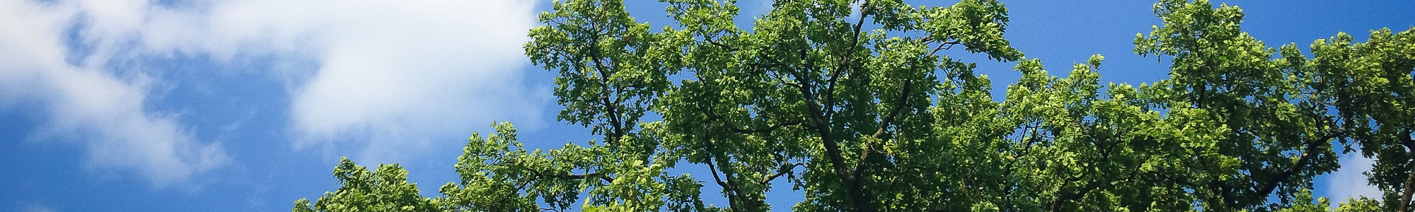Image of summer day with tree in blue sky.